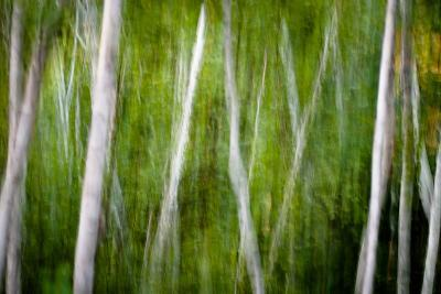 Green Abstract I-Beth Wold-Photographic Print
