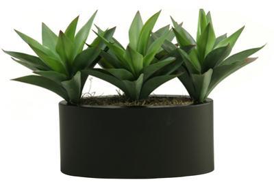 Green Aloe Trio Planter