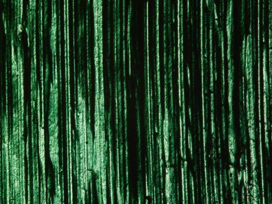 Green and Black Brush Strokes--Photographic Print