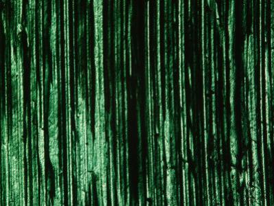 Green and Black Brush Strokes