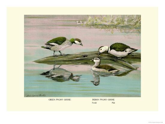 Green and Indian Pygmy Goose-Louis Agassiz Fuertes-Art Print