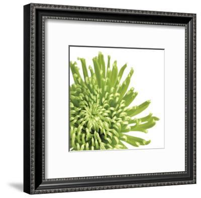 Green Bloom III (detail)-Jenny Kraft-Framed Giclee Print