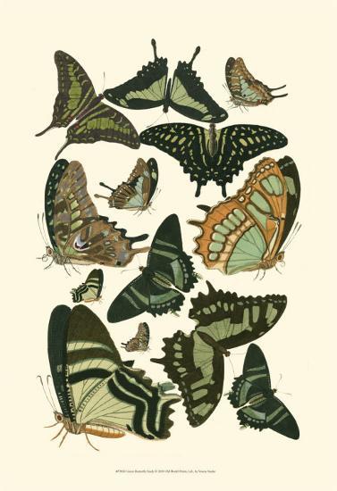 Green Butterfly Study--Art Print