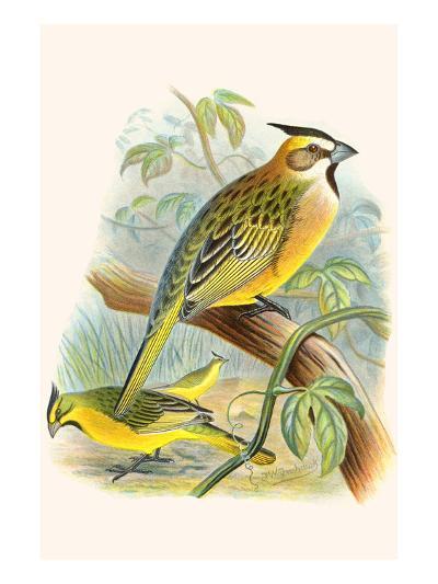 Green Cardinal-F^w^ Frohawk-Art Print