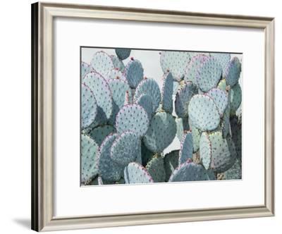 Green Crush VIII-Elizabeth Urquhart-Framed Art Print