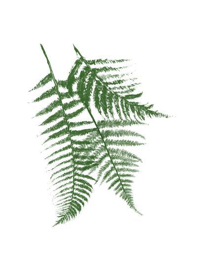 Green Ferns Mate-Jace Grey-Art Print