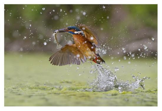 Green Fishing-Marco Redaelli-Giclee Print