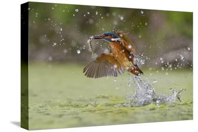 Green Fishing-Marco Redaelli-Stretched Canvas Print