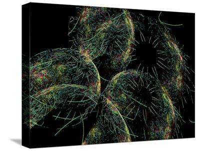 Green Flames-Tatiana Lopatina-Stretched Canvas Print