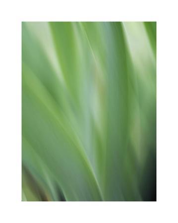 https://imgc.artprintimages.com/img/print/green-flora-motion_u-l-f8vflm0.jpg?p=0