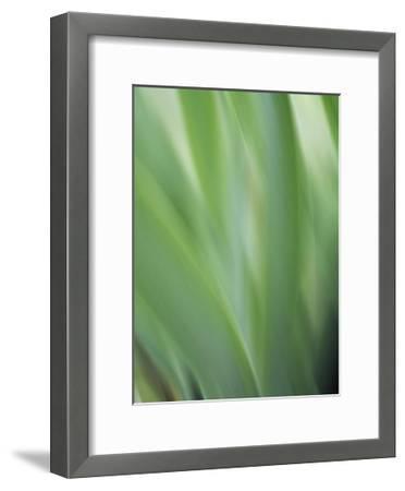 Green flora motion-Savanah Plank-Framed Giclee Print