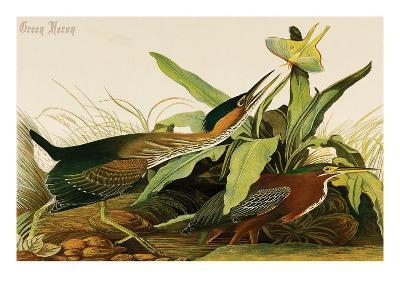Green Heron-John James Audubon-Art Print
