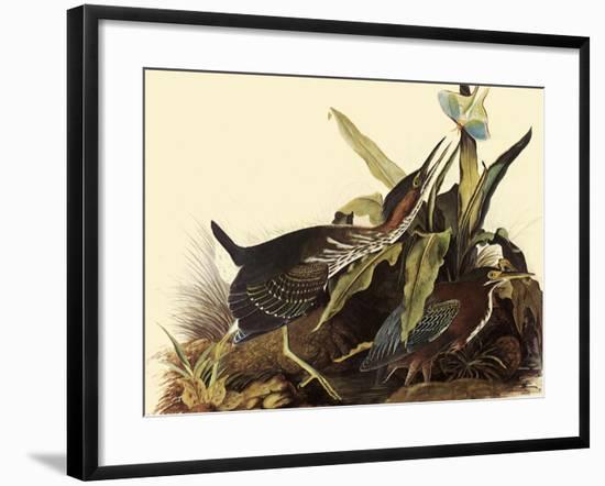 Green Herons-John James Audubon-Framed Giclee Print