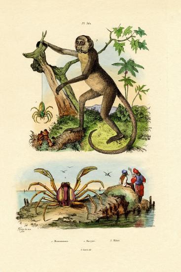 Green Huntsman Spider, 1833-39--Giclee Print