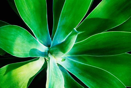Green Intrigue-Bruce Nawrocke-Photographic Print