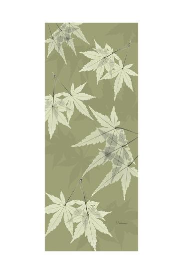 Green Japanese Maple-Albert Koetsier-Premium Giclee Print