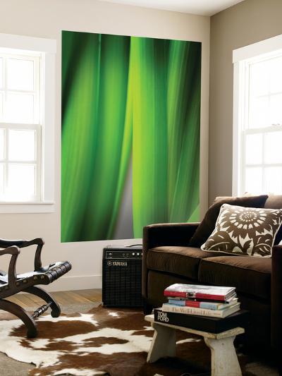 Green Leaf Curtains-Philippe Sainte-Laudy-Wall Mural