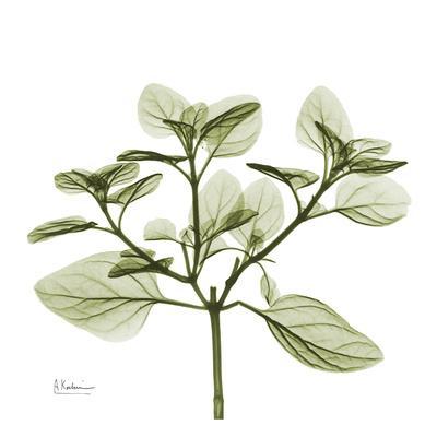 https://imgc.artprintimages.com/img/print/green-leaves-in-bloom-ii_u-l-f5482h0.jpg?p=0