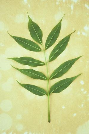 https://imgc.artprintimages.com/img/print/green-leaves_u-l-pz0ugx0.jpg?p=0