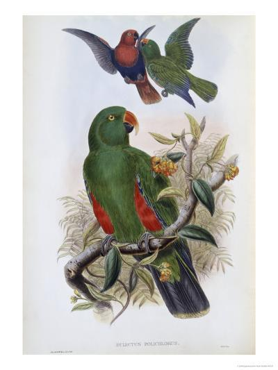 Green Lory-John Gould-Giclee Print