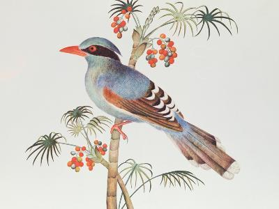Green Magpie, Ch'Ien-Lung Period--Giclee Print