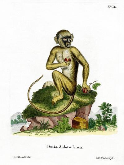 Green Monkey--Giclee Print