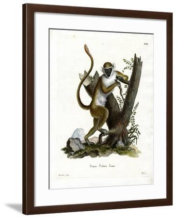 Green Monkey--Framed Giclee Print