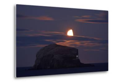 Northern Gannet (Morus Bassanus) Colony, Bass Rock with the Moon Rising, Firth of Forth, Scotland
