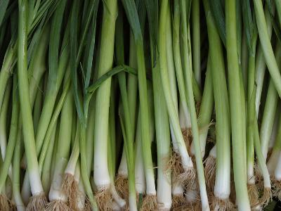 Green Onions--Photographic Print