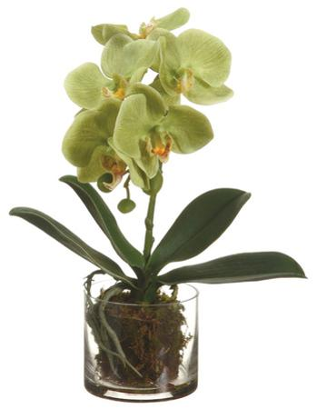 """Green Orchid Plant - 13"""""""