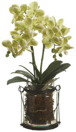 """Green Orchid Plant - 18"""""""