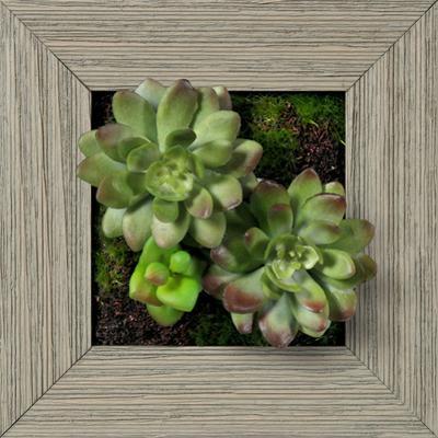 Green/Purple Echeveria Square - Farmhouse Gray