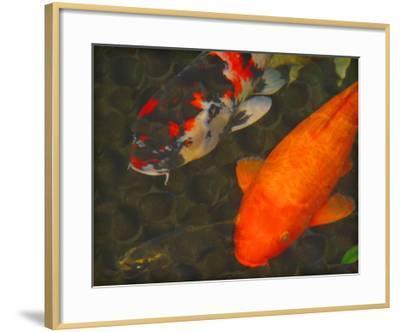 Green Rock Japanese Koi II-erichan-Framed Giclee Print