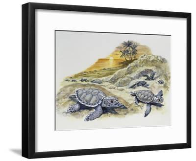 Green Sea Turtle or Pacific Green Turtle (Chelonia Mydas) Hatchlings on Beach, Cheloniidae