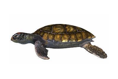Green Sea Turtle--Art Print