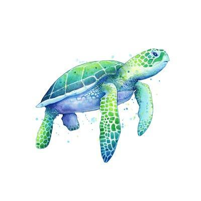 https://imgc.artprintimages.com/img/print/green-sea-turtle_u-l-q1ddmm70.jpg?p=0