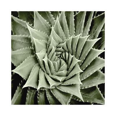 https://imgc.artprintimages.com/img/print/green-succulent-i_u-l-f8veur0.jpg?p=0