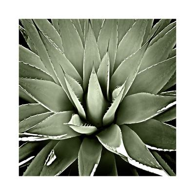 https://imgc.artprintimages.com/img/print/green-succulent-iii_u-l-f8vfvs0.jpg?p=0