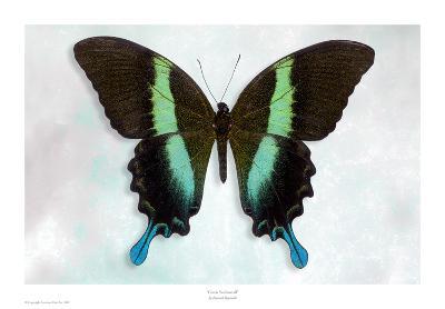 Green Swallowtail-Richard Reynolds-Art Print
