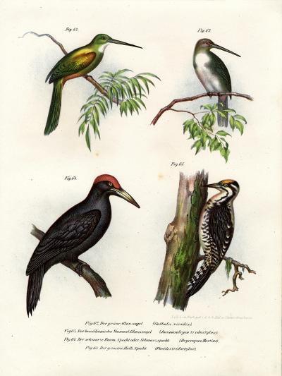 Green-Tailed Jacamar, 1864--Giclee Print