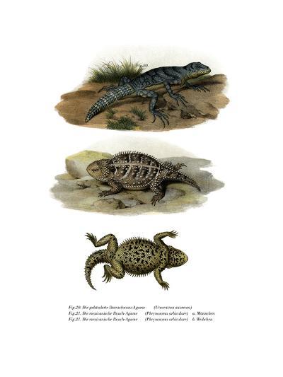 Green Thornytail Iguana--Giclee Print