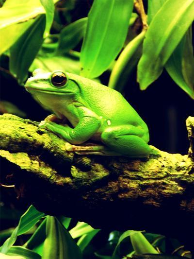 Green Wildlife Frog Animal-Wonderful Dream-Art Print