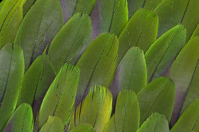 https://imgc.artprintimages.com/img/print/green-wing-feathers-of-a-parrot_u-l-q12t8ix0.jpg?p=0