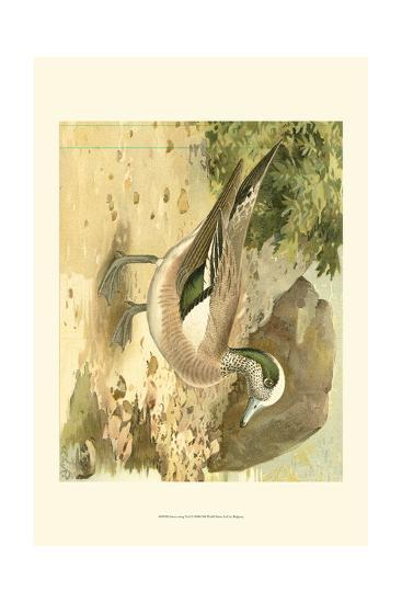 Green-wing Teal-Ridgeway-Art Print