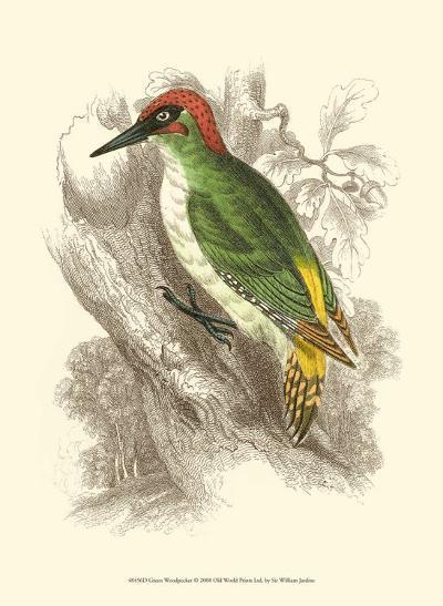 Green Woodpecker-Sir William Jardine-Art Print