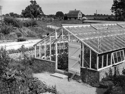 Greenhouse, Fox Ash