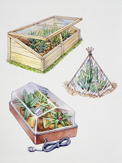 Greenhouse, Plastic Covering for Plants and Plant Propagation Box--Giclee Print