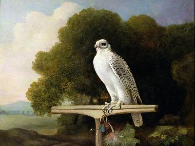 Greenland Falcon (Grey Falcon), 1780 (Oil on Panel)-George Stubbs-Giclee Print