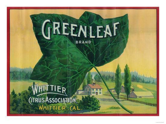 Greenleaf Lemon Label - Whittier, CA-Lantern Press-Art Print