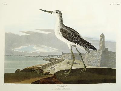 Greenshank, View of the St, 1835-John James Audubon-Giclee Print